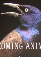 Becoming Animal thumbnail