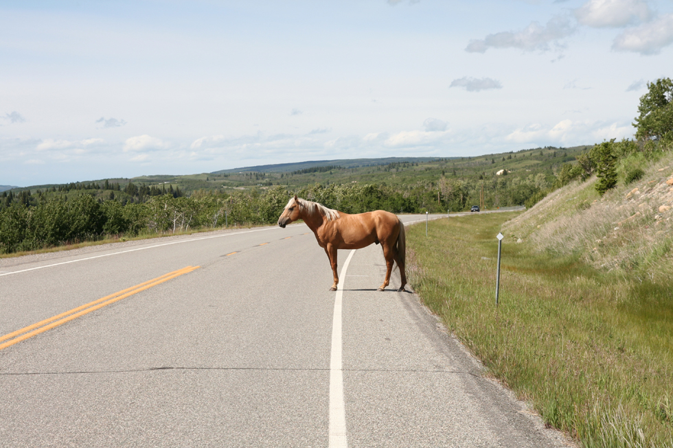 The Horse on the Road
